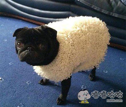 披着羊皮的汪星人