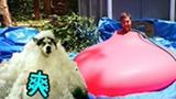 奇葩老外钻水球降温