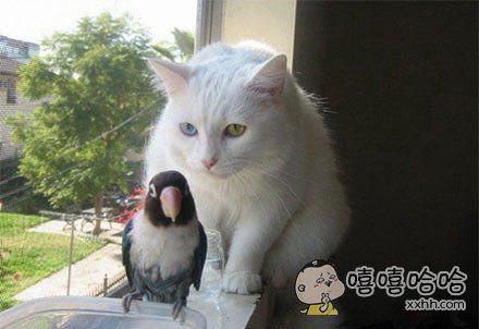 喵星人:Hey,兄弟,这是我的地盘!