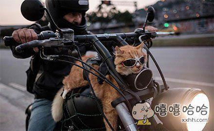 巴西12岁猫咪乘摩托出行,戴墨镜扮酷!