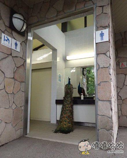 在动物公园的男厕所遇见一只孔雀