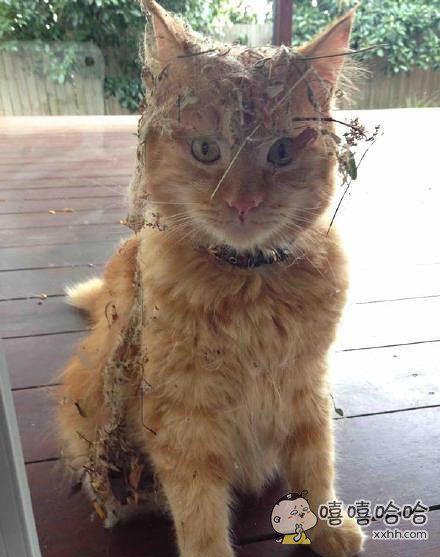 早上外出散步的猫回来了。。。。。