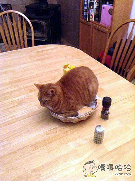 服务员,我的面包上有毛