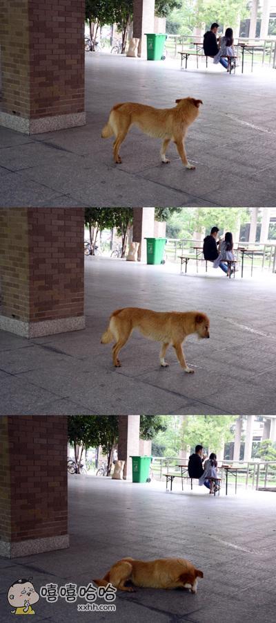 单身狗表示看不下去了