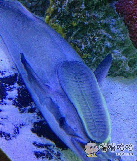这鲨鱼确定不是被踩了一脚吗?