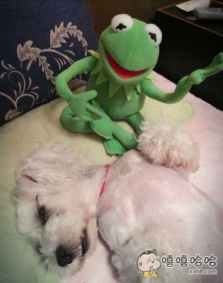 买了一只很魔性的青蛙,把我家汪直接哄睡着了