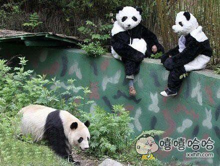 做熊猫管理员真的是一件很有爱的事