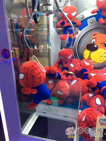 一只紧紧抓住玻璃,死都不愿意下来的蜘蛛侠