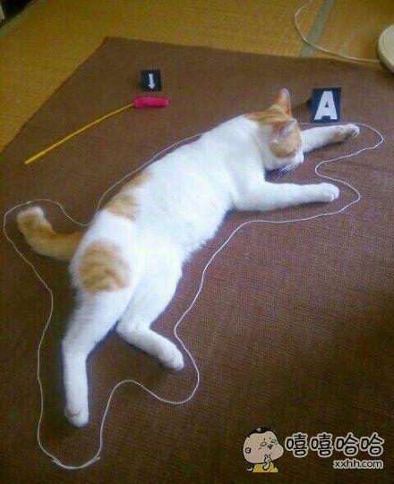 岛国一主人表示,当家里猫咪赖床不起时,他就用这种方式提醒它是只废猫了