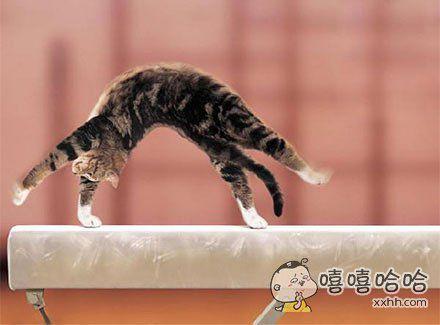 阿喵,你可以去参加奥运会了!