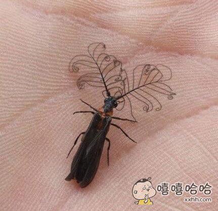 一只骨骼精奇的虫子……
