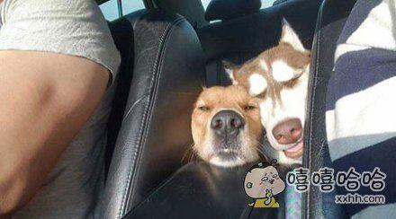 两个蠢汪非要挤在一起吹空调睡觉觉