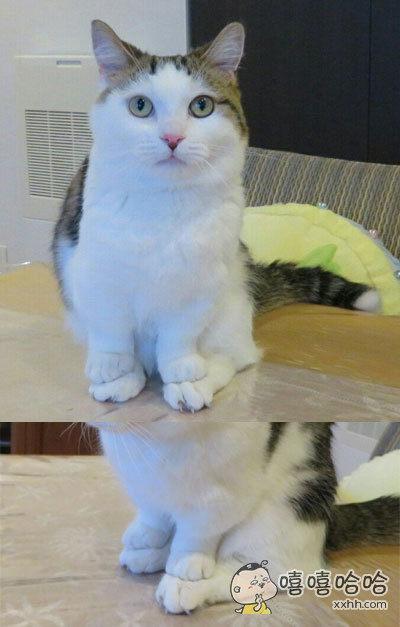 短腿猫的心机,这个方法简直太机智了
