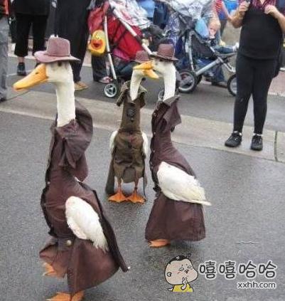 上层社会上的土豪大鹅