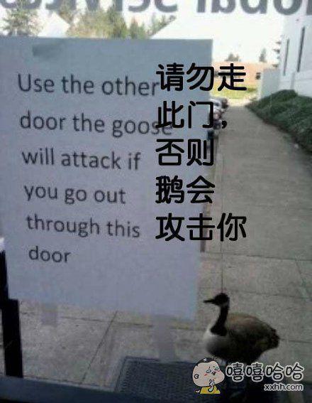 鹅的战斗力真的很强
