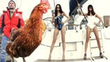 壕任性!游艇骚年带鸡环游世界