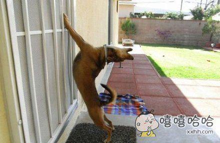 开门呐,开门呐,开门开门开门呐!