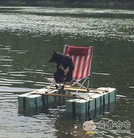 分享一只度假熊