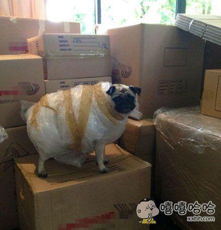 """一只准备托运的狗狗:""""我不想承认自己是只羊。"""""""