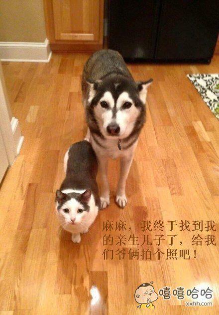 二哈,你确定这猫星人就是你的儿子么,恭喜你喜当爹啊