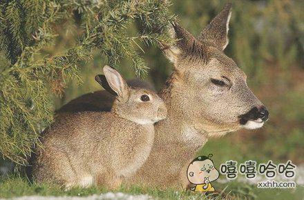 我没你这个兔崽子~