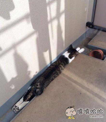 一只有强迫症的猫