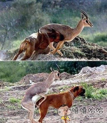 猎人带着猎狗去打猎,结果猎人哭了。。。