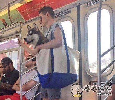 你们天天说的狗带是什么意思?