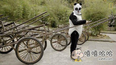 为了让熊猫宝宝不要依赖人类,研究院们将自己伪装成熊猫好辛苦啊,但是这画面真的。。。