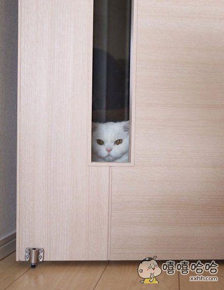 给朕开门!