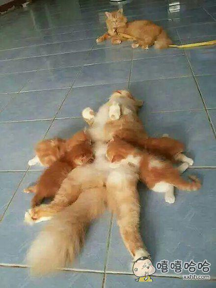 网友家的母猫每次在哺乳的时候,粑粑总会跟小猫抢奶喝,于是主人就等母猫再哺乳的时候,把粑粑给暂时圈起来了