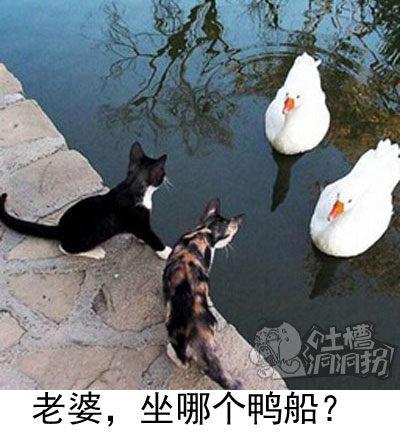 老婆,坐哪个鸭船?