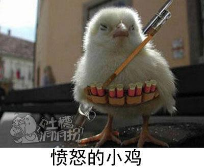 愤怒的小鸡