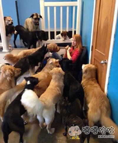 养一堆狗,让自己无路可走