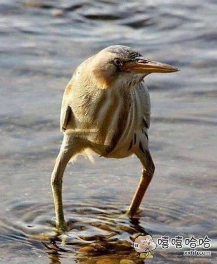 撩起裤脚过河