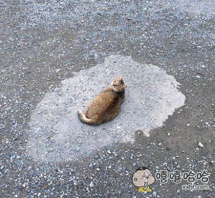 """感受一下什么叫做""""猫结界"""""""