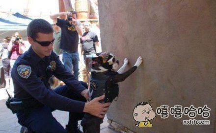 不许动,我是警察,搜身。
