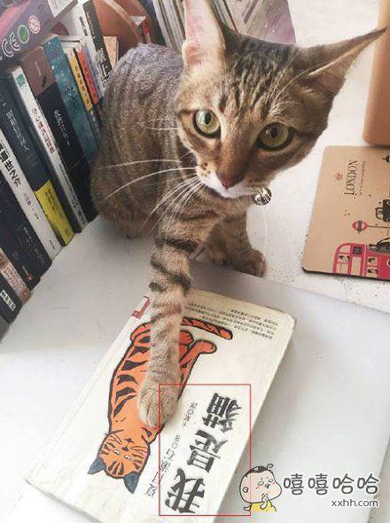 喵:我是猫?