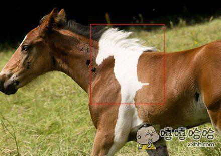 一匹有故事的马