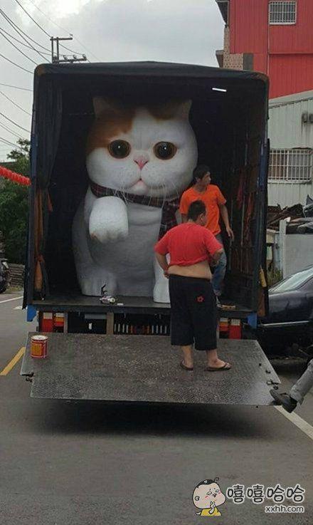 巨猫入侵,生人勿近