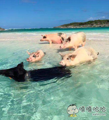 带了几个朋友出门游泳