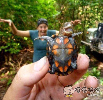 感染力爆棚的乌龟,感觉空气都happy起来了怎么回事