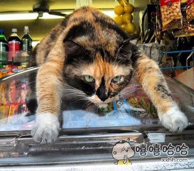 小卖部看门猫,赶快给我送钱买买买啦,刁民!