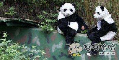 现在的熊猫都进化啦?