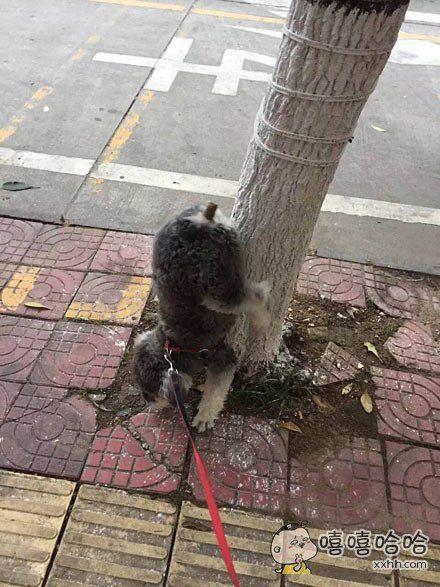 一只拉屎开挂的狗