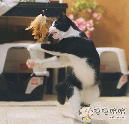 每一个不曾起舞的日子,都是对逗猫棒的辜负
