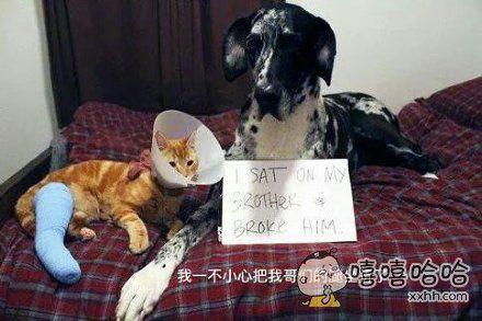 家里的蠢狗犯错后。。。