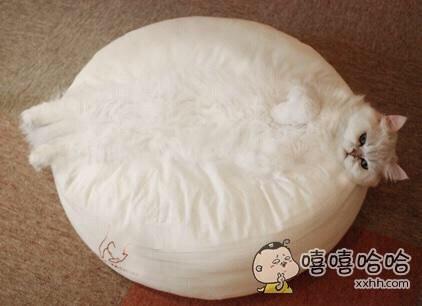 乍一看,我还以为这是一只史前巨型肥猫