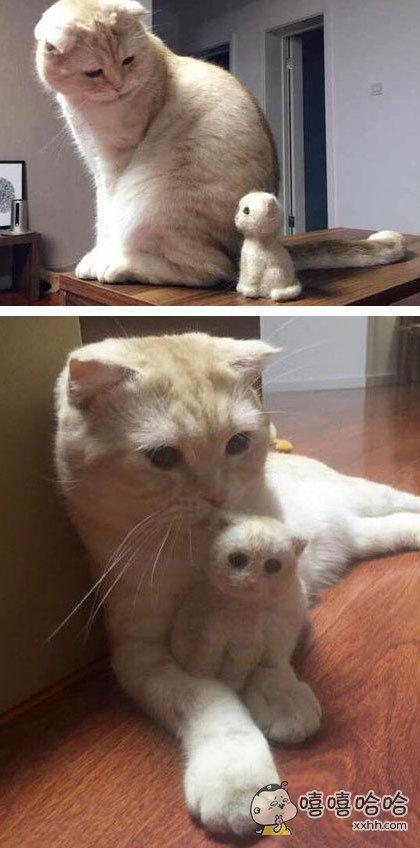 主人用猫掉下来的毛,做了一个小小猫。喵:身上全是我的味道,一定是亲生的