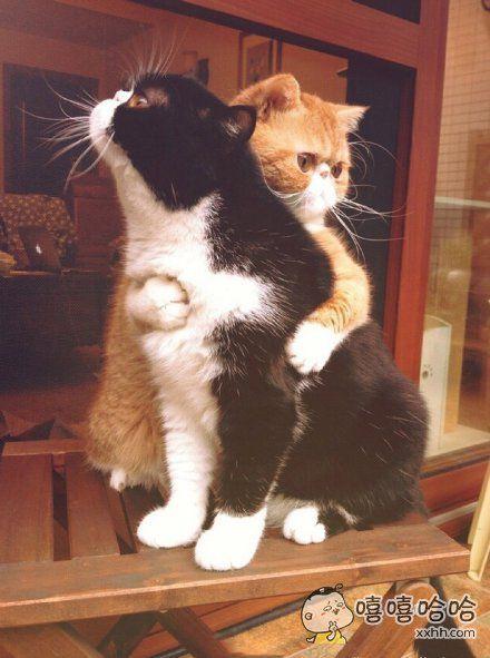 抱抱,不哭